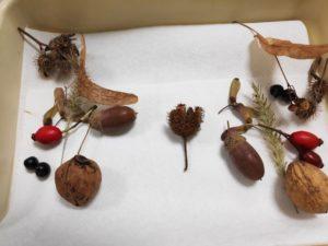 La reproduction végétale au Lycée Jean 23